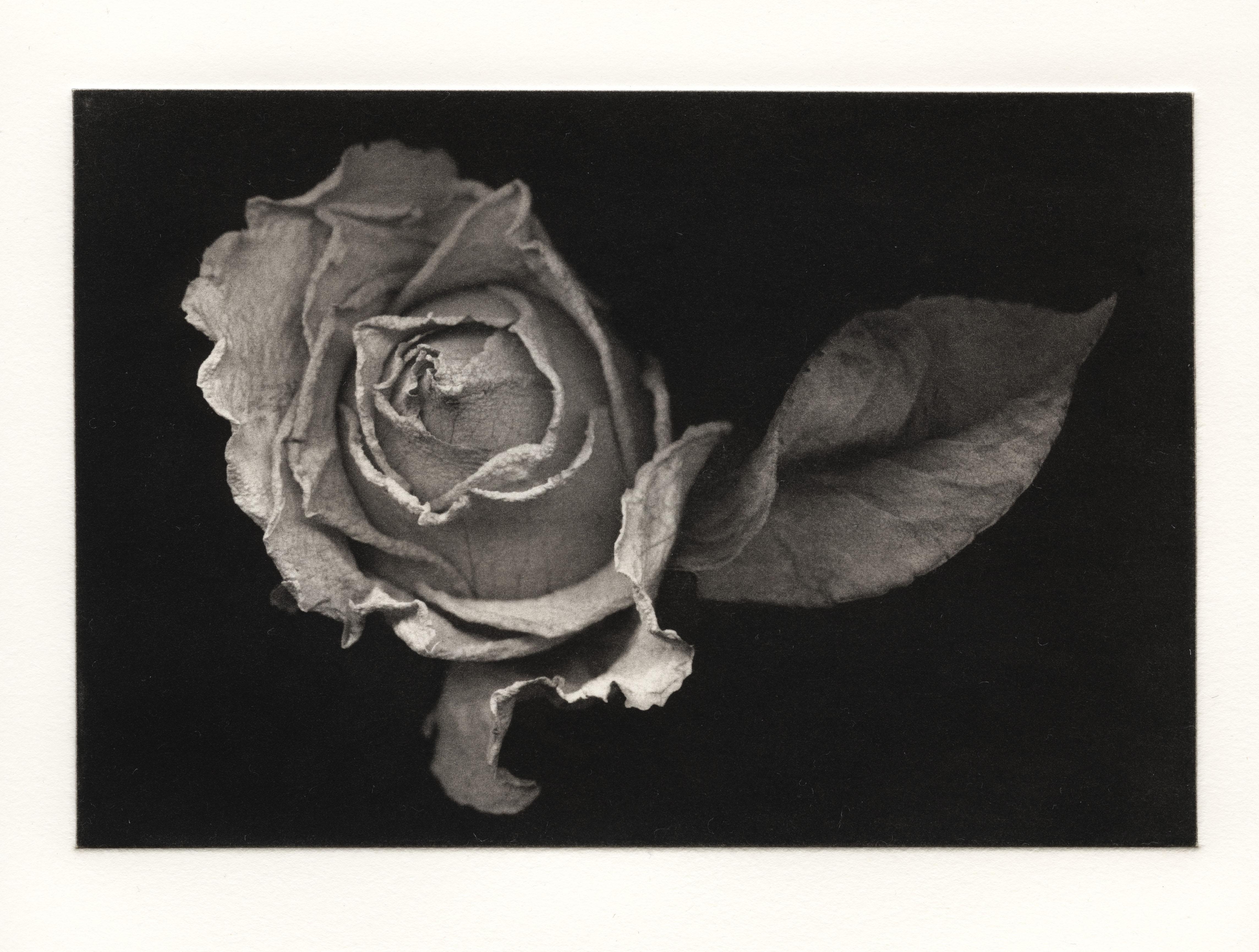 Jon Lybrook : Polymer Photogravure for More Photographic